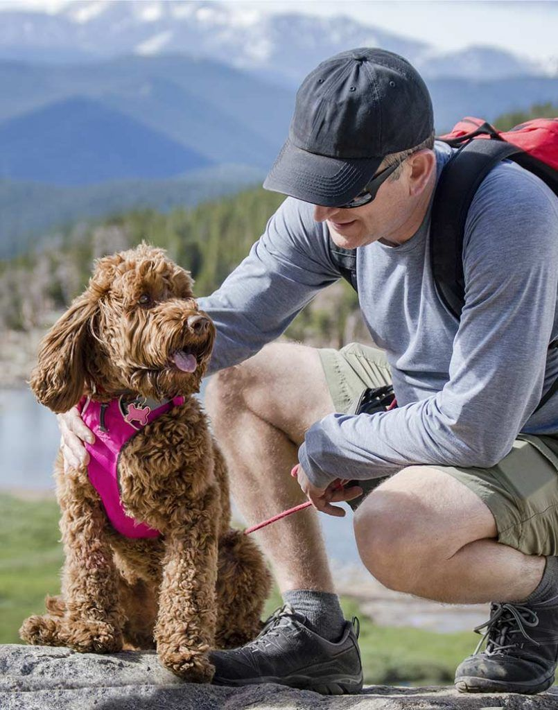 Discover dog activities including in- and outdoor activities, sports, tours, adventures & day trips - Doggies in Town - 816x1038