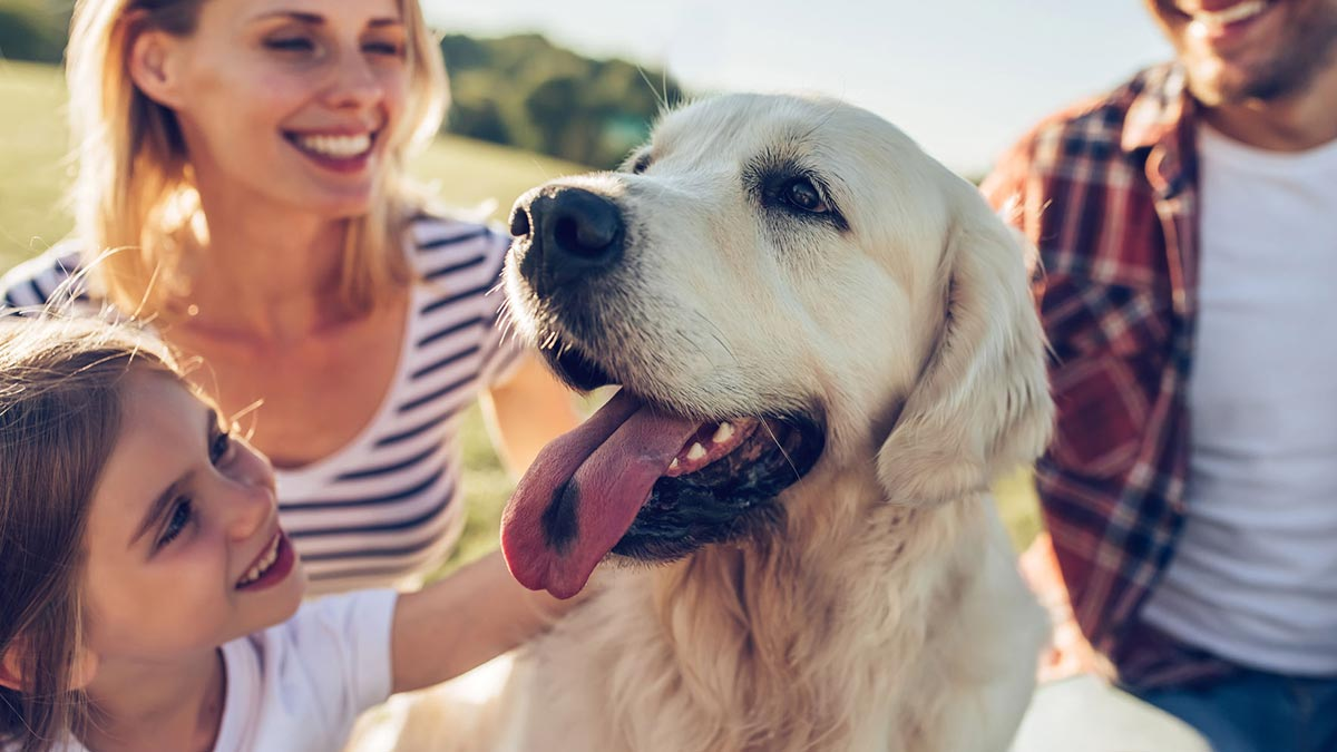 Dog sitter near me_ How to find the best dog watchers for your next vacation_1200x675.jpg