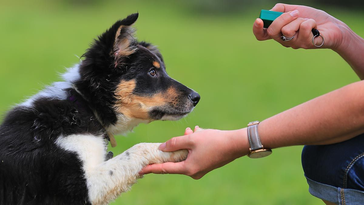 Tricks And Tips For Teaching A Dog Of Any Age - Doggies in Town