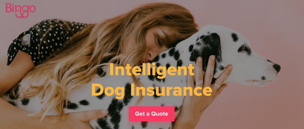 Bingo-Insurance-1024x436