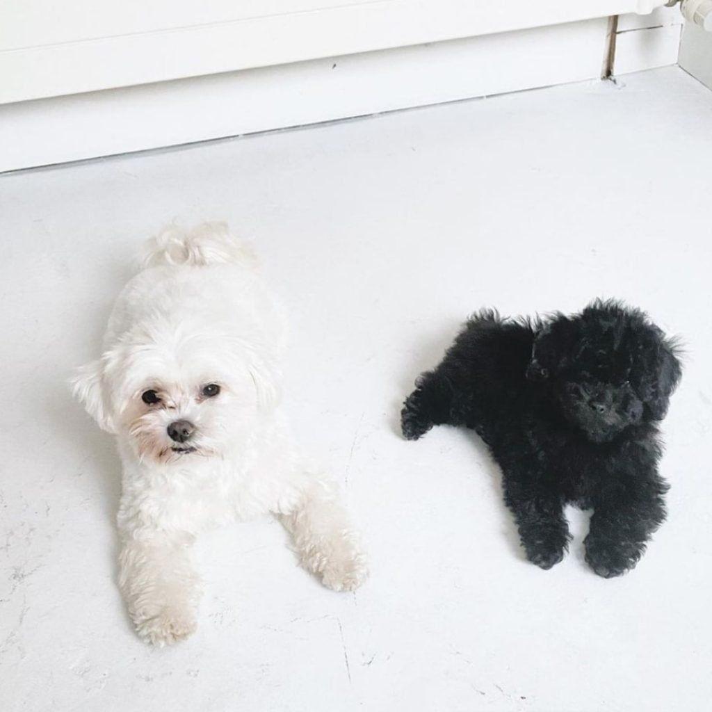 Cutest-Dogs-Doggies-in-Town-1024x1024