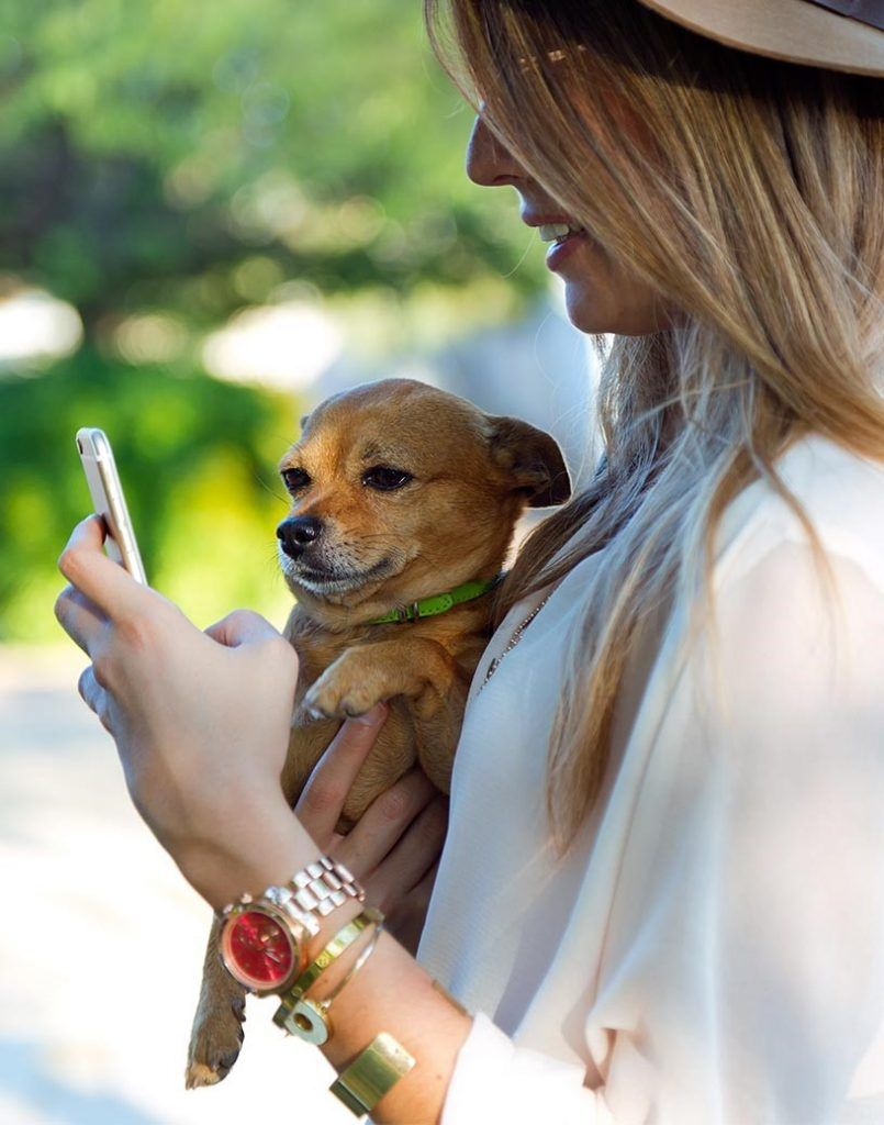 Discover the best nearby & online offers and discounts for you & your dog - Doggies in Town - 816x1038-new-4