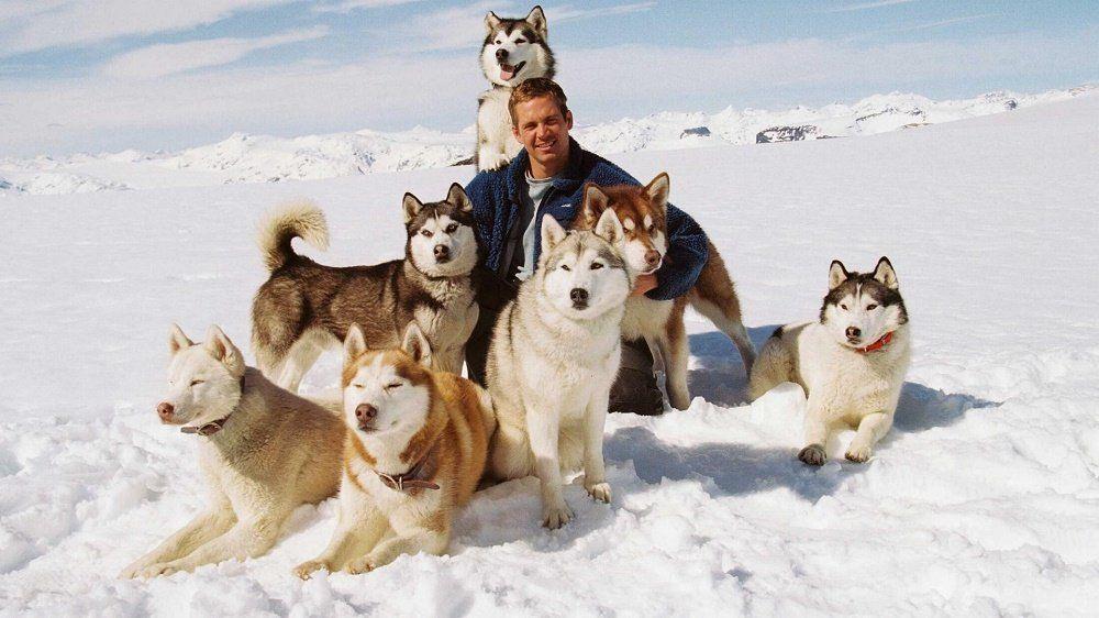 Eight Below - Top Dog Movies - Doggies in Town