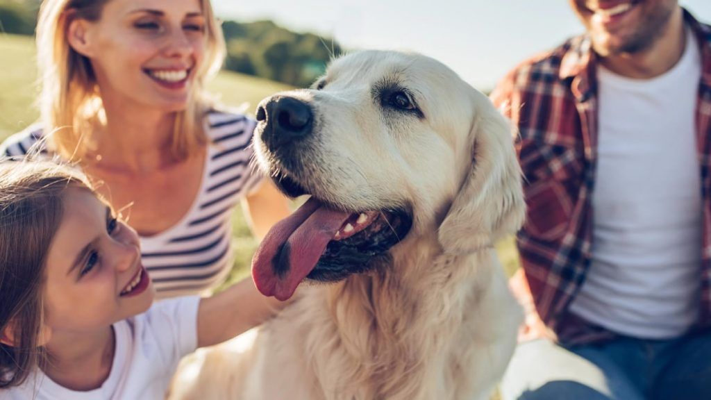 How-Dogs-Can-Positively-Impact-Your-And-Your-Childs-Life-Doggies-in-Town-1024x576