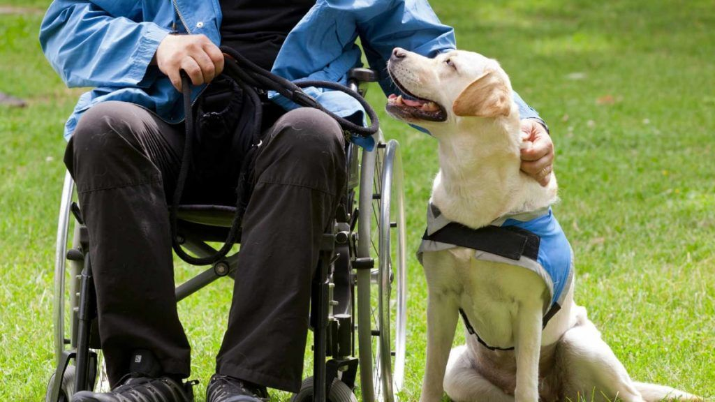 How-Service-Dogs-Can-Help-People-With-Disabilities-Doggies-in-Town-1024x576