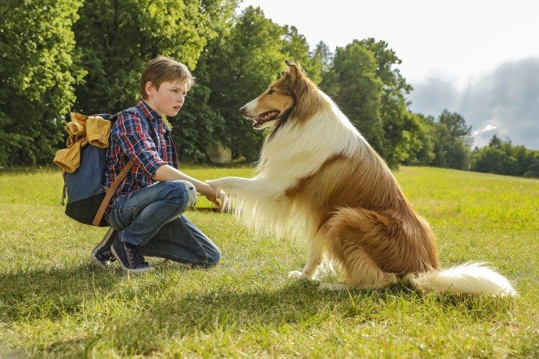 Lassie - Top Dog Movies - Doggies in Town