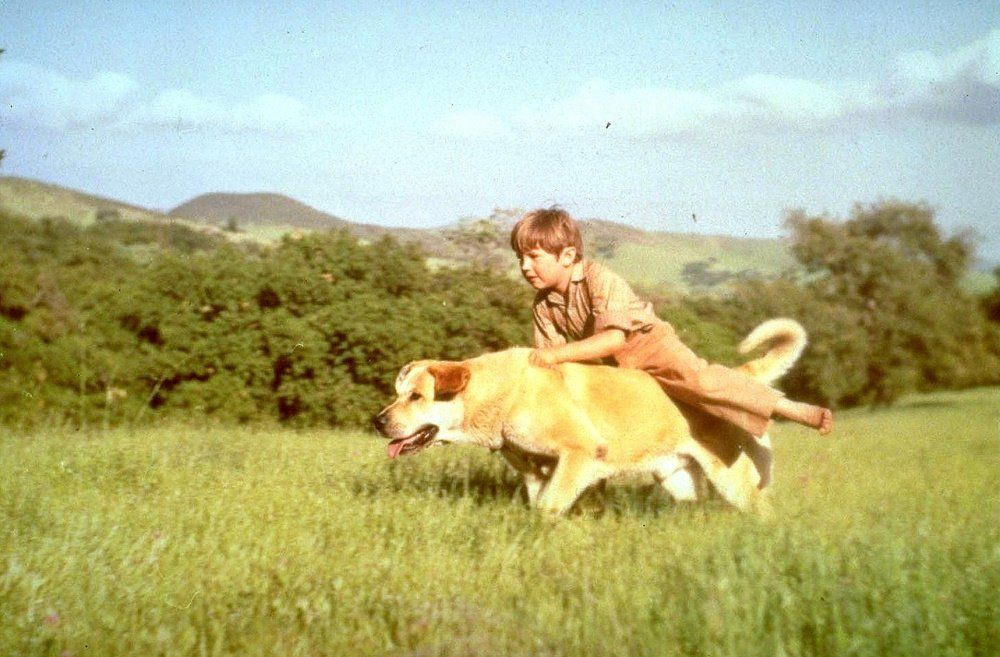 Old Yeller - Top Dog Movies - Doggies in Town