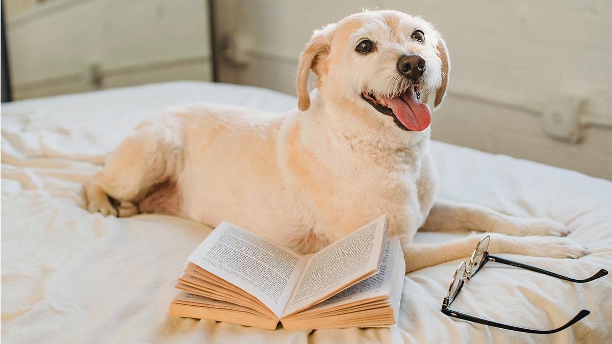 mejores libros adiestramiento canino