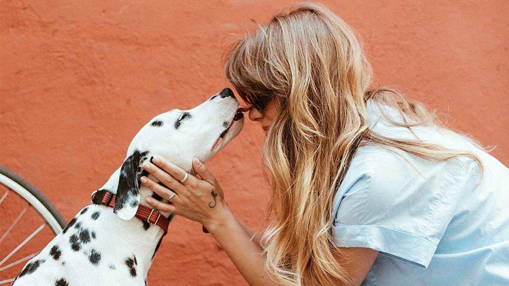 relacion entre perros y humanos