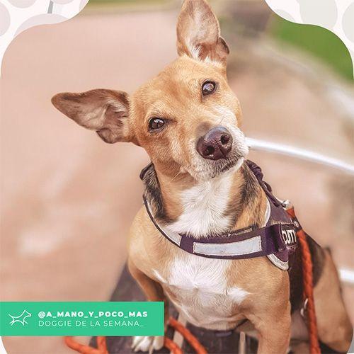 @A_mano_y_poco_mas - Doggie of the week - Blog - Doggies in Town