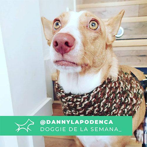 @Dannylapodenca - Doggie of the week - Blog - Doggies in Town