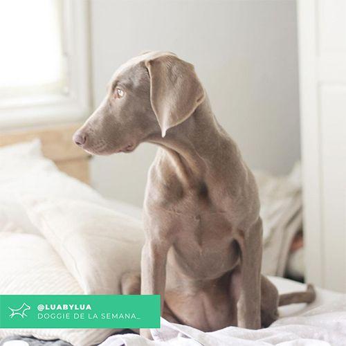 @Luabylua - Doggie of the week - Blog - Doggies in Town