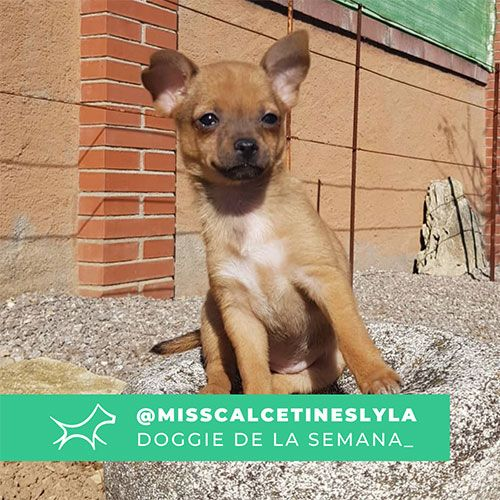 @Misscalcetineslyla - Doggie of the week - Blog - Doggies in Town