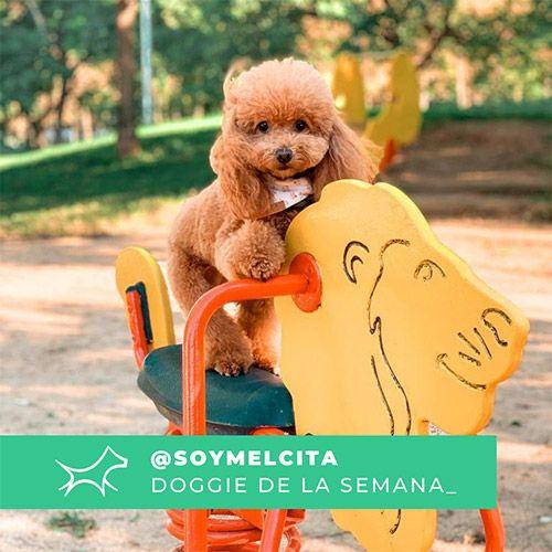 @Soymelcita - Doggie of the week - Blog - Doggies in Town