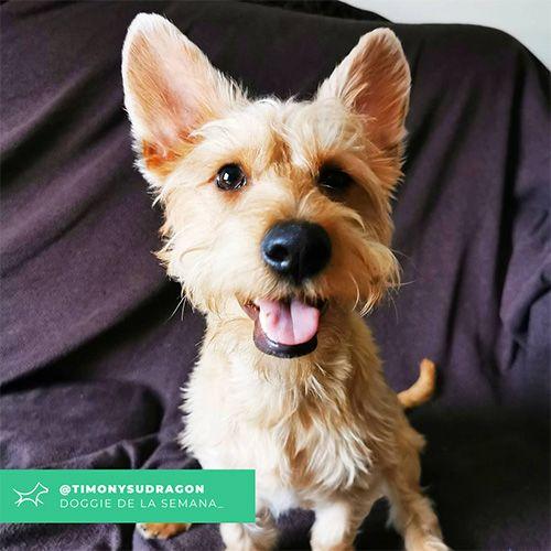 @Timonysudragon - Doggie of the week - Blog - Doggies in Town