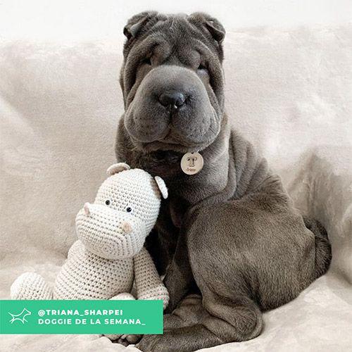 @Triana_sharpei - Doggie of the week - Blog - Doggies in Town
