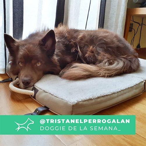 @Tristanelperrogalan - Doggie of the week - Blog - Doggies in Town