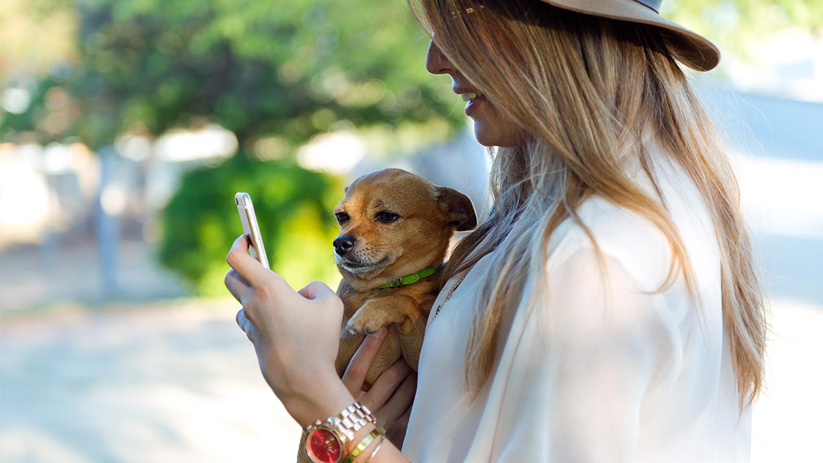 Blog_App Para Perros En Busca De La Mejor Aplicación_Doggies in Town