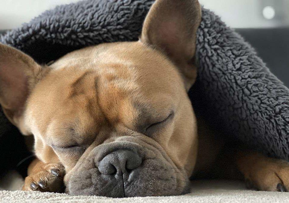Como hacer que un perro o cachorro duerma toda la noche