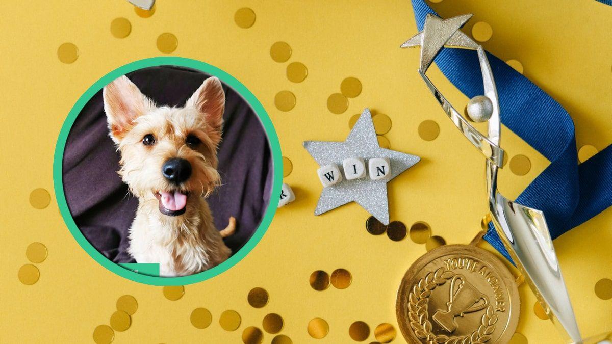 Lista de Perros de La Semana - Doggies in Town