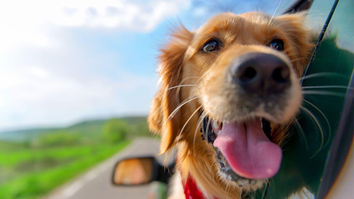 Article_Doggies in Town_Consejos para viajar con perros_1200 x 675