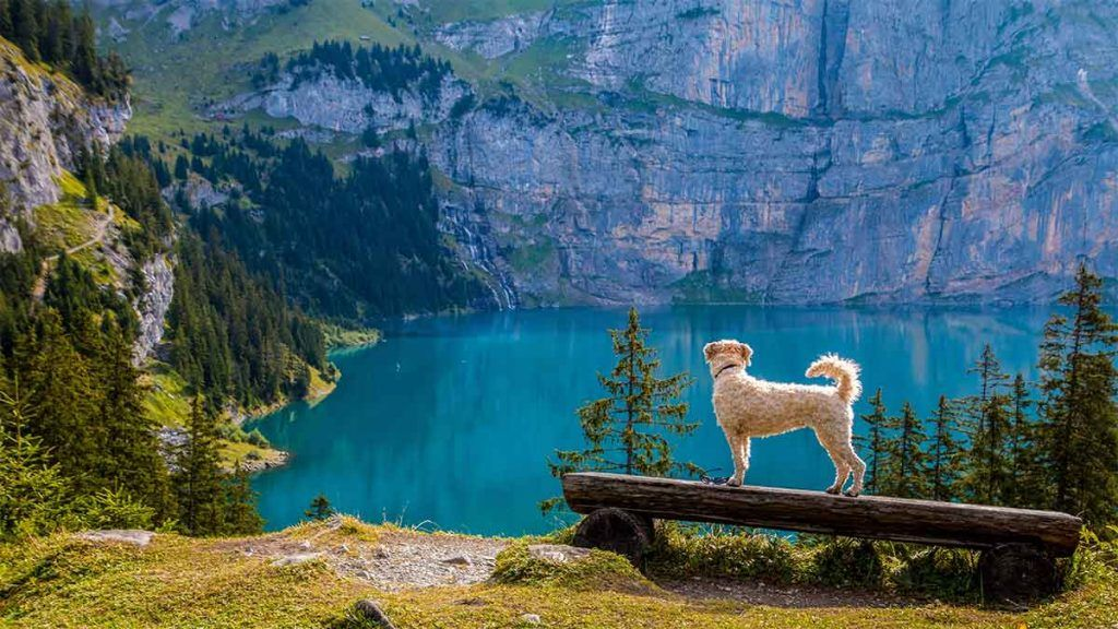 Article_Doggies in Town_Tips to travel with your dog 14_1200 x 675