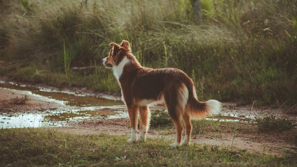 Article_Doggies in Town_Tips to travel with your dog 2_1200 x 675