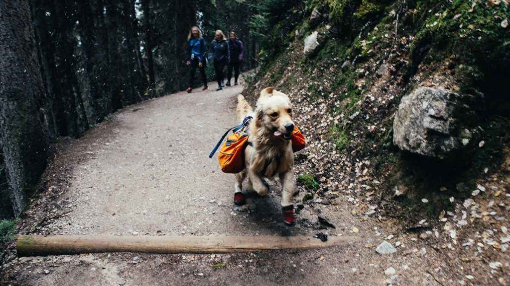 Article_Doggies in Town_Tips to travel with your dog 4_1200 x 675