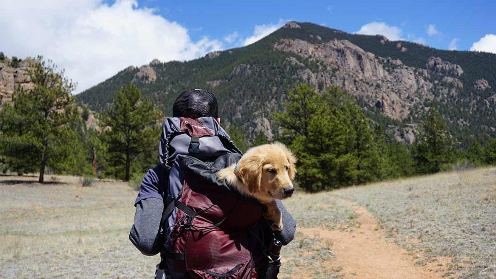 Article_Doggies in Town_Tips to travel with your dog 5_1200 x 675