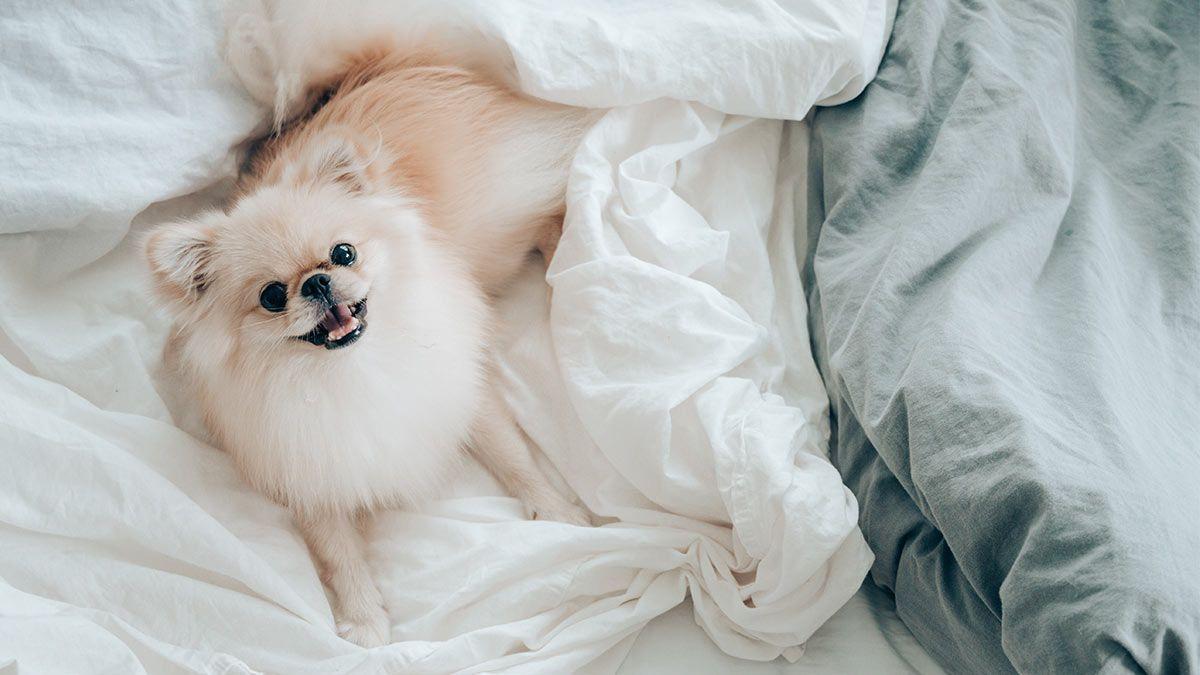 hoteles que admiten perros y mascotas en madrid