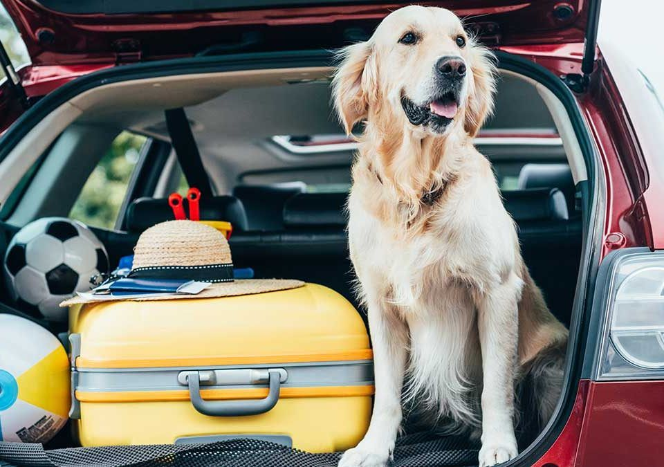 Article_Doggies in Town_Where to travel with your dog_1200 x 675