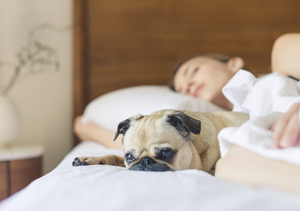 Article dog friendly hotels in Malaga Spain 1200 x 675