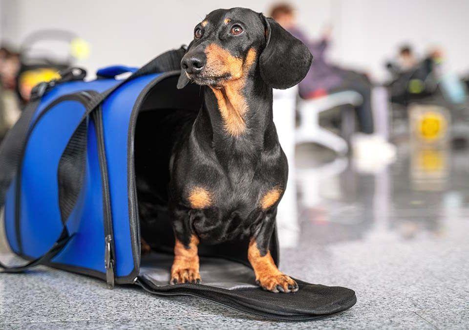 Cómo viajar con perros en coche, tren y avión - Doggies in Town - Blog