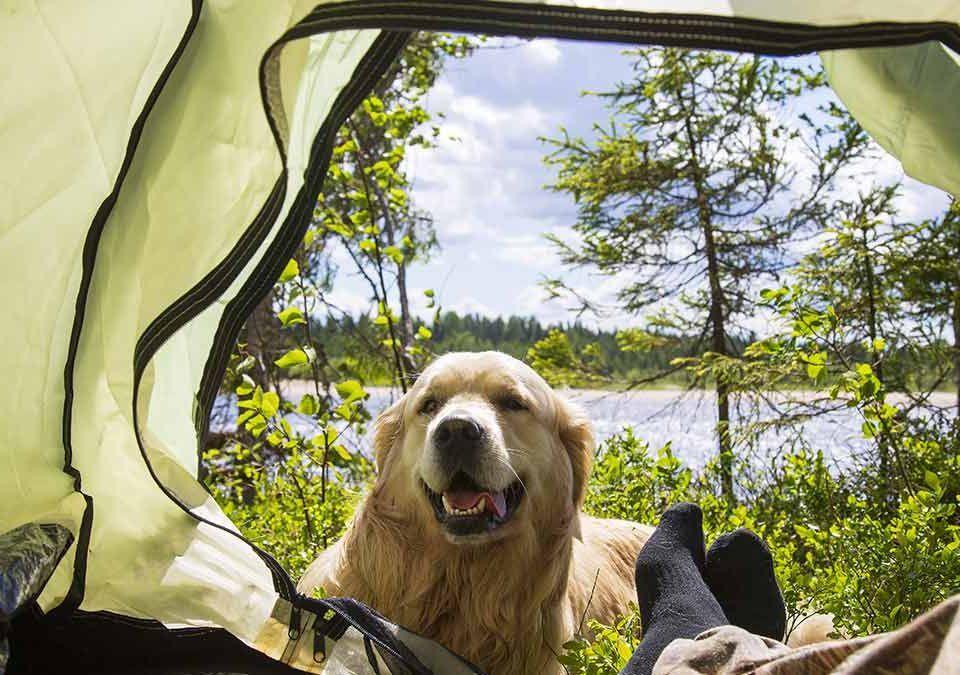 Los mejores campings que admiten perros para este verano - Doggies in Town - Blog
