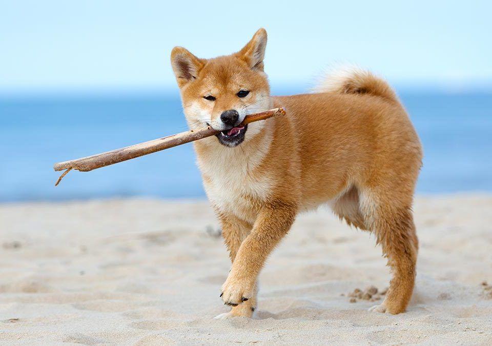 Playas que admiten perros en Málaga y cómo llegar - Doggies in Town - Blog